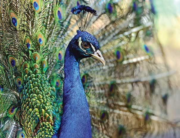 birdwatching-srilanka4