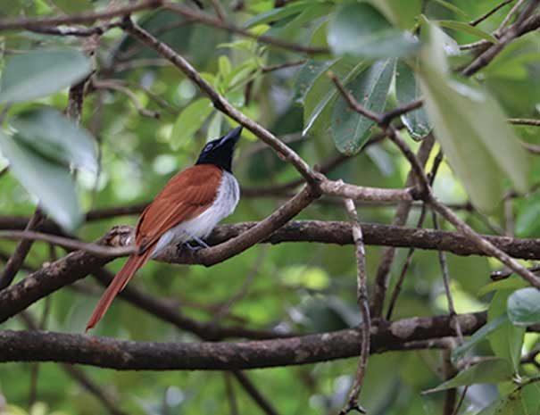 birdwatching-srilanka6