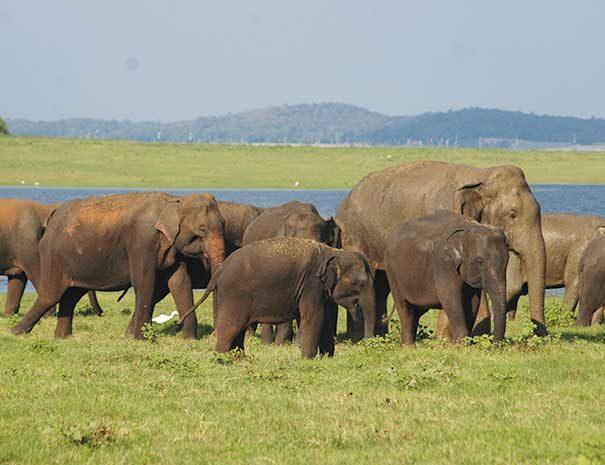 srilanka-at-a-glance2